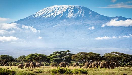 Bestig Kilimajaro
